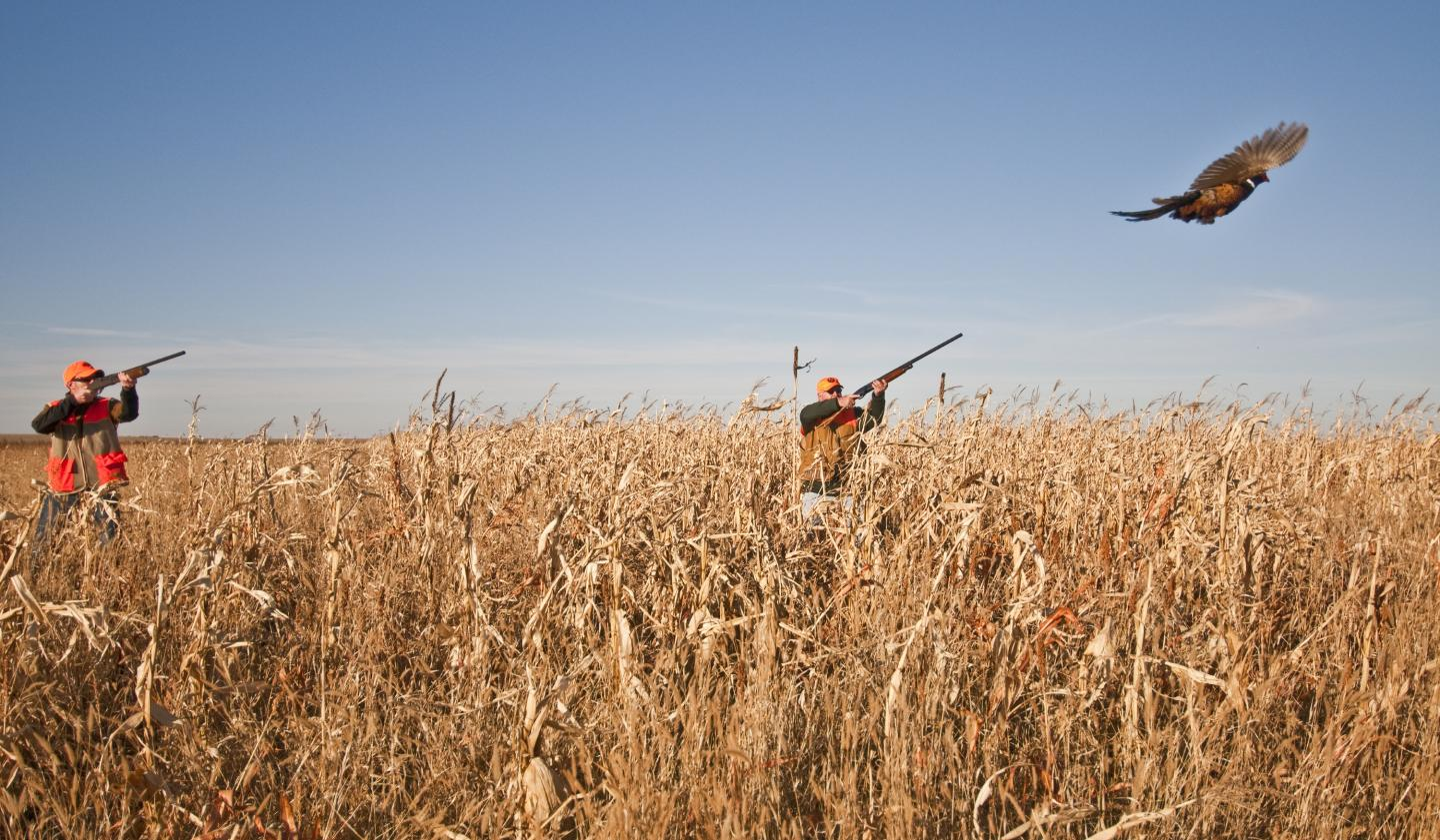Pheasant hunting south dakota places to see what to see for South dakota fishing