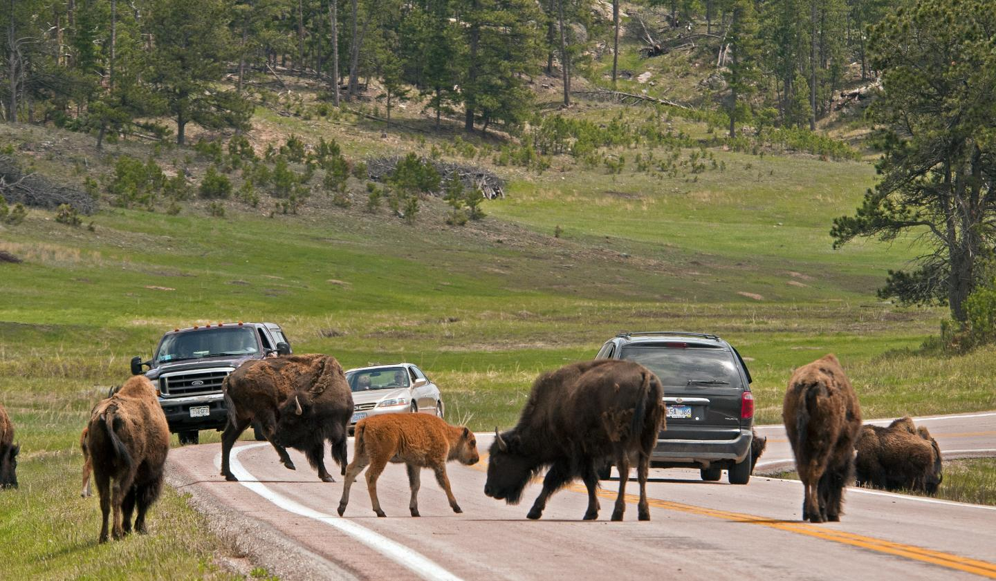 Wildlife Loop State Scenic Byway South Dakota Places