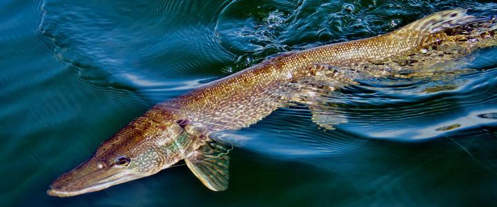 Fishing south dakota best family vacation spots for South dakota fishing