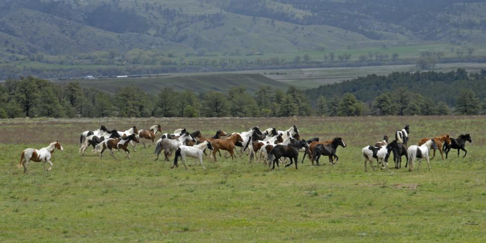 Black Hills Wild Horse Sanctuary, Hot Springs